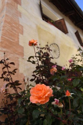 Sent_Blumen und Sgraffito