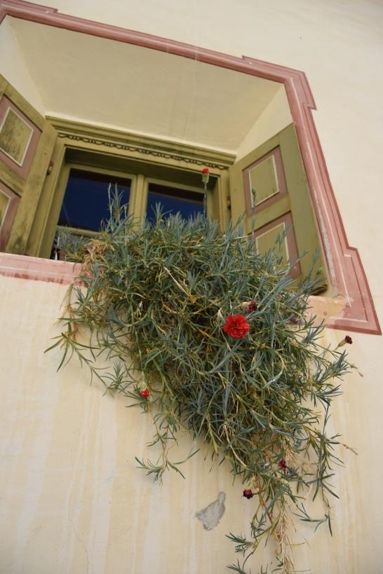 Sent_Typische Fensterblumen