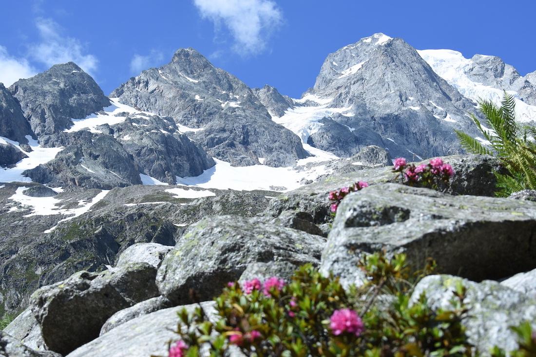 Wallis_Alpenrosen_2