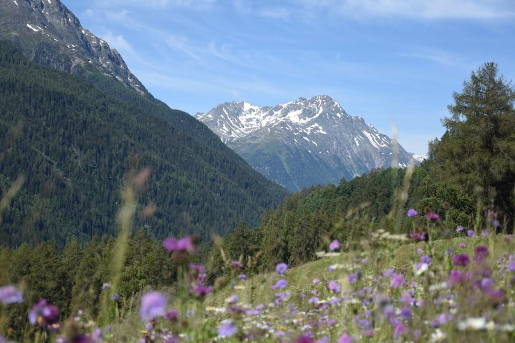 Von Ardez nach Bos-cha_Blumenwiesen